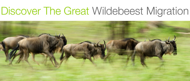 wildebeest migration east africa