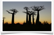 10 day 1000 Views Of Madagascar - Jenman Safaris