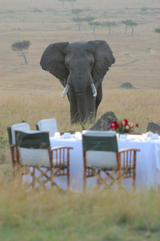 Safari Royale Wildlife Holidays