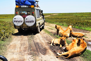 Worldwide Safaris Tanzania