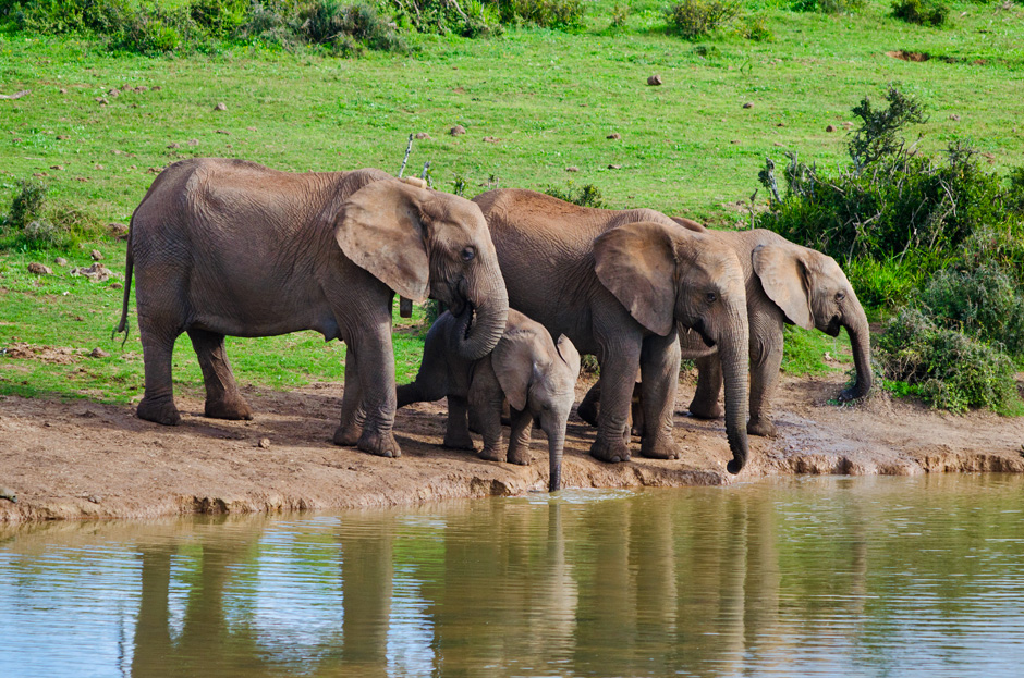 Addo Elephant National Park – a unique place of beauty and diversity