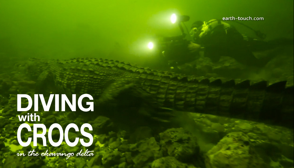 Crocodile Quest Episode 1 – Diving With Crocs