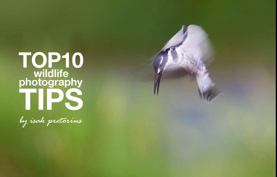 Wildlife Photography Top 10 Tips – by Isak Pretorius
