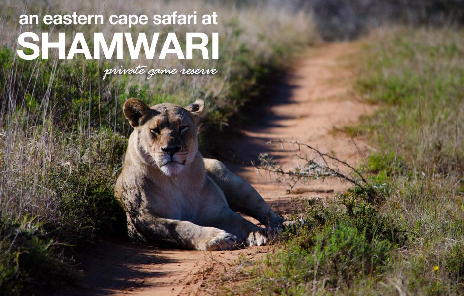Shamwari Private Game Reserve – A Fun Family Safari!