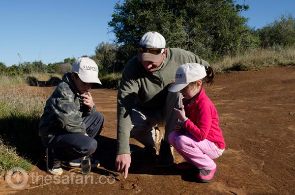 Child-friendly safari at Shamwari