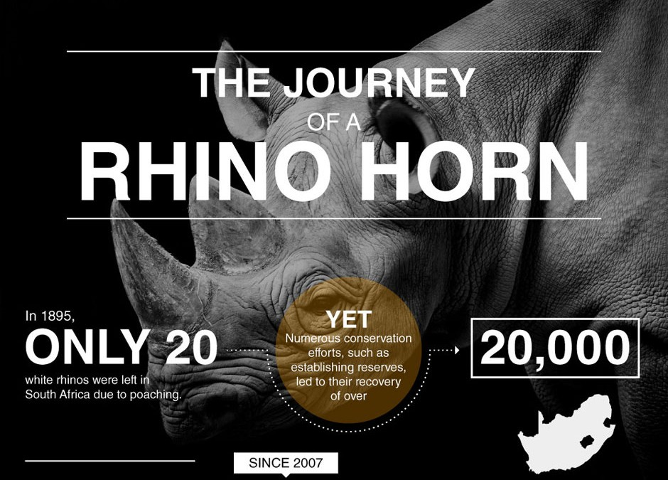 The Journey of a Rhino Horn