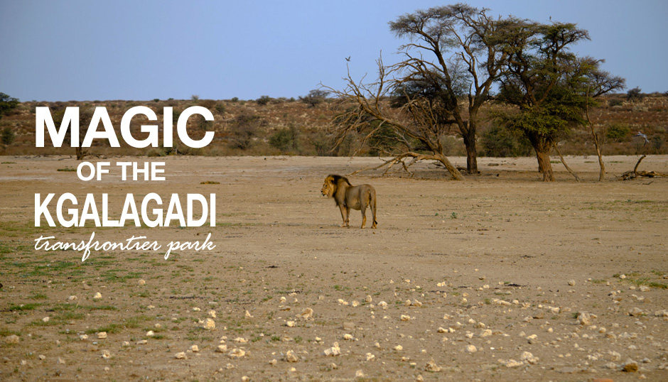 The Magic Of The Kgalagadi