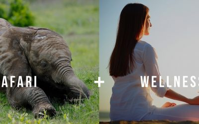 Safari & Wellness Holidays